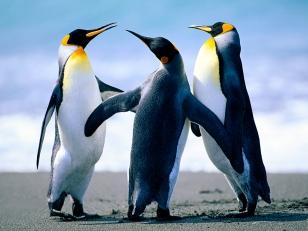 Penguins Dance